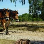 horses-3628030