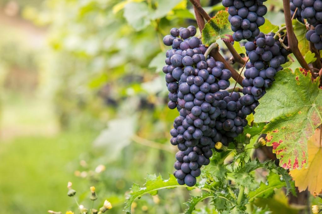 wine-980218